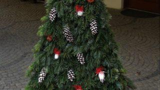 Výstava vánočních stromků / fotogalerie / Střední lesnická škola Hranice, foto: Veronika Koláčková