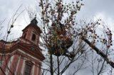Hranické náměstí opět zdobí kraslicovník / fotogalerie / Zdobení kraslicovníku, foto: Radka Kunovská