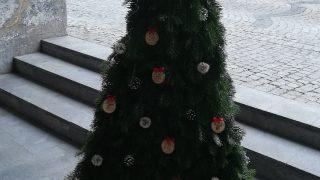 Výstava vánočních stromků / fotogalerie / Střední lesnická škola Hranice, foto: Ivana Žáková
