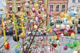Kraslicovník oživuje centrum Hranic / fotogalerie / Kraslicovník na Masarykově náměstí, foto: Ivana Žáková