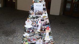 Výstava vánočních stromků / fotogalerie / Galerie M+M, foto: Ivana Žáková